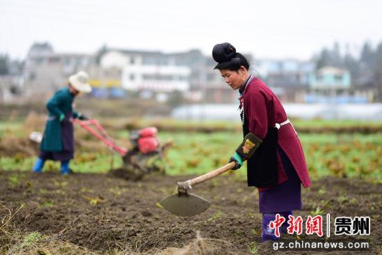 图为黔东南州丹寨县龙泉镇马寨村村民在翻整土地。 杨武魁 摄