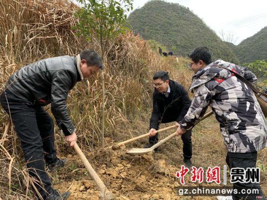 贵州省黔南布依族苗族自治州长顺县组织开展义务植树活动,种下新年新希望,展现新年新气象。
