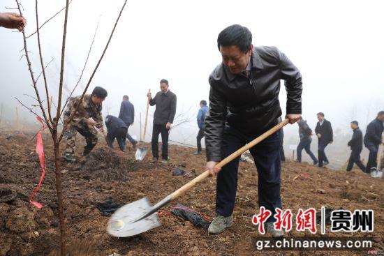 水城县举行2019年义务植树活动。