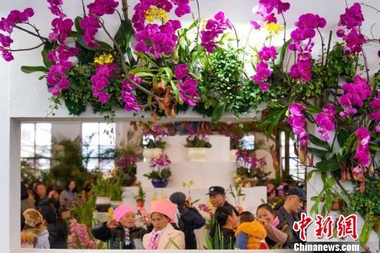 第二十九届中国兰花博览会在贵州惠水开幕,游客观赏兰花。贺俊怡 摄。