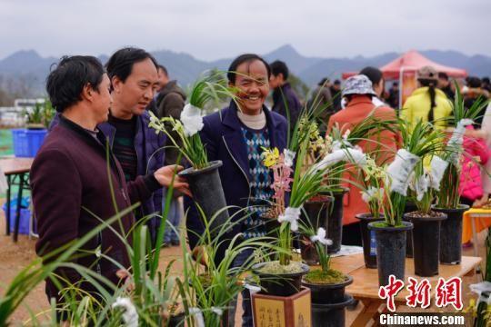 图为第二十九届中国兰花博览会现场。贺俊怡 摄