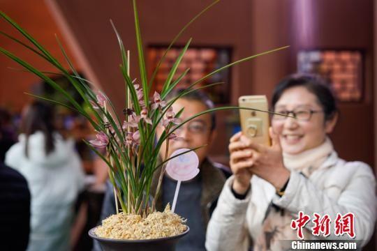 看到喜欢的兰花,游客拿出手机拍照。贺俊怡 摄。