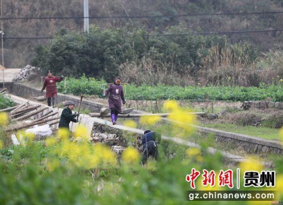 贵州省铜仁市玉屏侗族自治县新店镇丙溪村,村民在清除地里的杂草。胡攀学摄