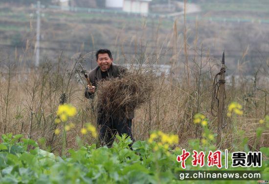 贵州省铜仁市玉屏侗族自治县新店镇丙溪村,村民在清除地里的杂草。