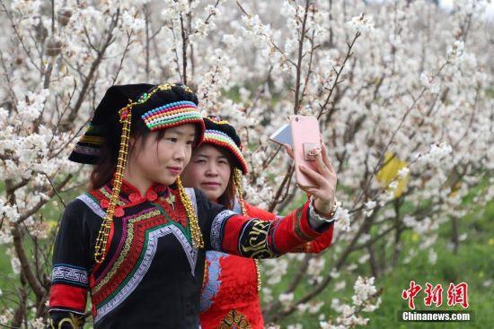 2月28日,穿着少数民族服装的游客在樱桃花园内自拍。近日,贵州省毕节市纳雍县的万亩樱桃花竞相绽放,吸引了不少市民和游客前去游玩观赏。万亩樱桃花由纳雍县厍东关乡和维新镇两大樱桃片区组成,主要种植玛瑙红樱桃,面积达到了4万余亩。中新社记者 瞿宏伦 摄