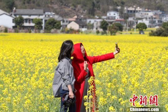 贵州兴义万峰林油菜花吸引游客拍照留念。贺俊怡 摄。
