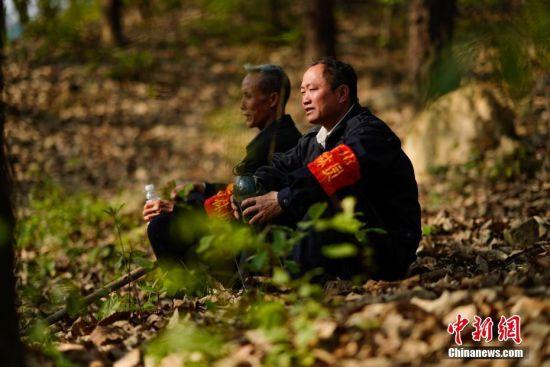 """3月10日,护林员王永仁(右)与同伴冉隆扩在巡山中小憩。44岁的护林员王永仁是贵州省望谟县红水河国有林场纳上片区护林员,1995年,王永仁一家来到望谟纳上林场,用4年的时间义务为林场种植184.5亩杉树,并对周边的天然林地进行保护。24年来与树为伴,坚持植绿、爱绿、护绿,纳上林场12000亩林场在他与同伴的守护下,树木得到妥善保护,森林火灾等人为隐患大大减少。2018年7月,贵州省发改委、林业厅、环保厅和共青团贵州省委对全省在建设国家生态文明试验区、推进大生态战略行动中做出突出贡献的10名护林员进行表彰,王永仁被授予""""十大生态护林员""""荣誉称号。中新社记者 贺俊怡 摄"""