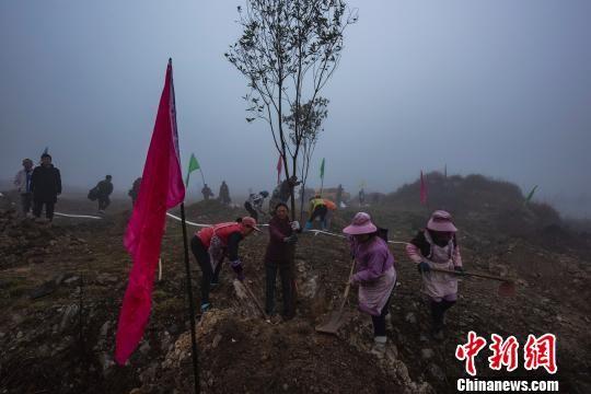 民众参与植树。 罗国林 摄