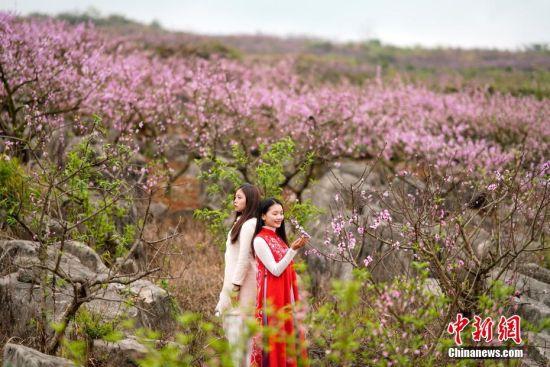 3月14日,两名游客在贵州兴义普梯万亩桃园里拍照留念。近日,贵州省兴义市乌沙镇普梯村万亩桃园盛开,盛开的桃花吸引游人前来赏花。进入三月,贵州各地迎来花期,民众踏春赏花,享受春光。中新社记者 贺俊怡 摄
