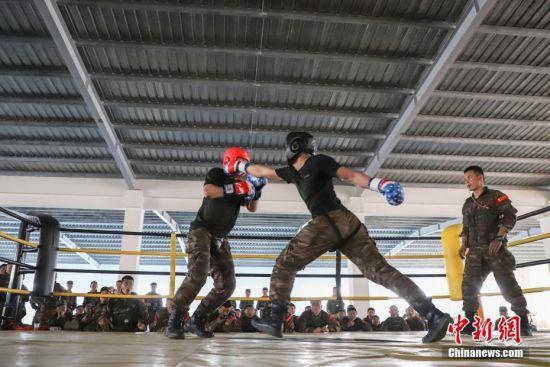 两名特战队员在进行自由搏击训练。中新社记者 瞿宏伦 摄