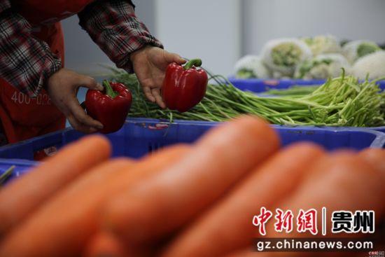 贵州省毕节市黔西县严把营养午餐每种食材的安全质量关。史开心 摄