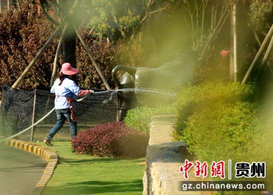 4月10日,在贵州省大方县奢香古镇,易地搬迁群众正在浇灌园林。尚宇杰 摄