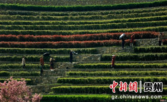 游客在贵州省毕节市大方县奢香古镇梯田拍照。尚宇杰 摄