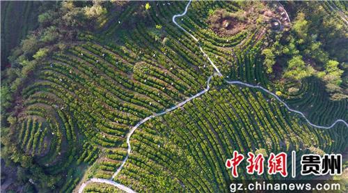贵州纳雍县鬃岭镇坪箐村山神箐大山,海拔2300米。纳雍县委宣传部供图