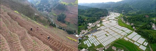 恒大已建成10223栋蔬菜大棚、13万亩大田基地。图为产业扶贫前后
