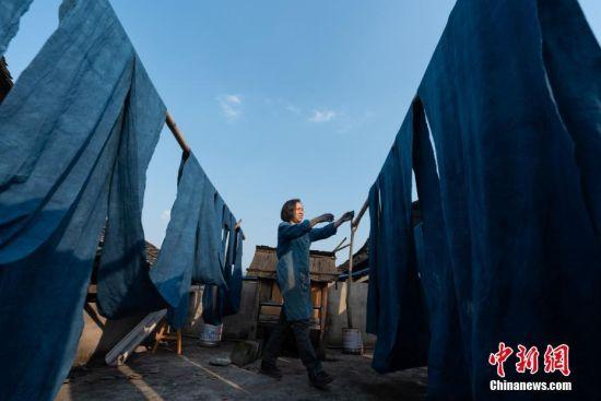 """蓝染是中国一种古老的印染工艺,已有上千年历史。在许多人眼里,蓝染只有一种颜色,而在贵州省榕江县,一位名叫赖蕾的侗族织娘却能染出二十四种色调,让蓝染有了第一份色谱――""""黔蓝""""。今年44岁的侗族织娘赖蕾,在高中毕业后考取了云南艺术学院油画专业。毕业后,她做过乡村教师、机关职员,最后选择了侗族传统手工技艺――织布、染布。赖蕾于2015年7月成立贵州娘美布彩印染坊,改良传统织布机和创新侗族传统染布技艺,融入现代时尚元素,生产布匹、服装、女式包、床上用品、茶席等文创产品,远销美国、法国及北京、上海、广州等地,年产值超过1000万元人民币,并带动榕江、从江等周边地区上千名妇女就业。赖蕾说,传统侗族人生活场景比较单一,与之相匹配的土布面料也没有几款,而且都是单一的一种蓝色调,纺织作坊开久了,就萌发了创新的心思,想要调制出一份蓝染色谱。在长时间摸索中,赖蕾发现在不同的温度和气候条件下所染出蓝色都会有所不同,于是就分别在春分、清明、谷雨、立夏、小满等二十四节气时将布染出了24种不同的蓝。2017年,""""二十四节气染布""""因具有较高的艺术与审美价值被中国民族博物馆收藏,由此衍生出的文创产品也得到了很多商家的青睐。图为织娘们用棉花纺成纱,再进行织布。中新社记者 贺俊怡 摄"""