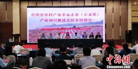贵州省农村产业革命水果(火龙果)产业项目推进及技术培训会现场 曾实 摄