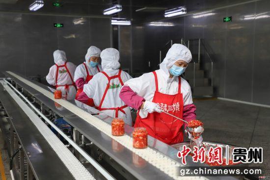 图为新蒲新区辣椒产业加工园辣椒企业正在生产。 瞿宏伦 摄