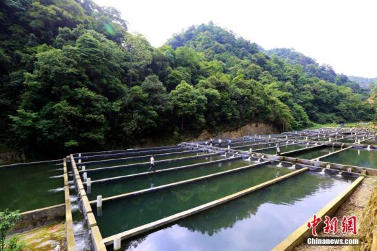 岑熬村原生态冷水养殖基地。李长华 摄