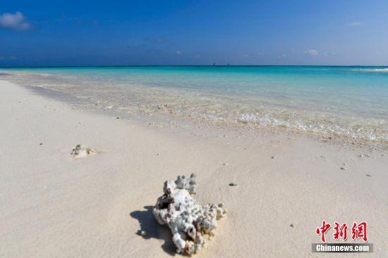 一块珊瑚石在西沙全富岛的白沙滩上。骆云飞 摄