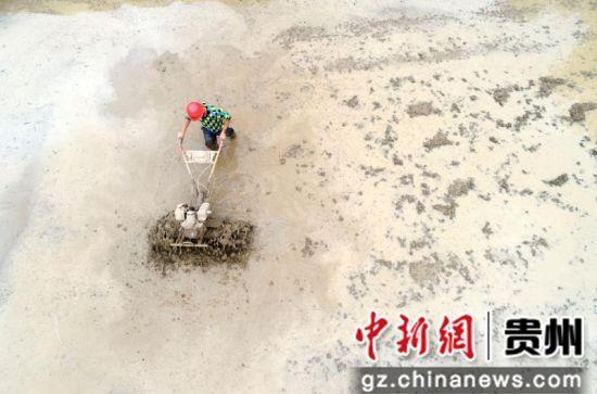 2019年5月30日,贵州省毕节市黔西县洪水镇解放村农民在耕田插秧。
