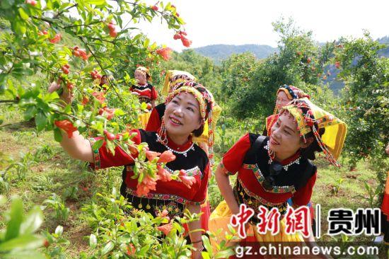 2019年6月2日,游客在贵州省毕节市黔西县红林彝族苗族乡红瓦房村石榴园地赏花。