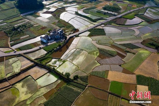 6月2日,航拍贵州万峰林景区初夏田园风光。进入插秧季节,从空中俯瞰农田色彩斑斓、纵横有致,宛如天然调色板。中新社记者 贺俊怡 摄