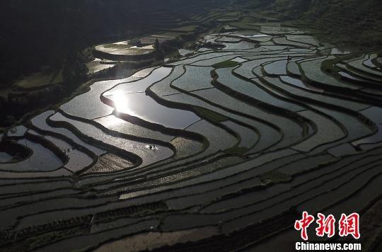图为6月2日,航拍贵州省丹寨县龙泉镇高要梯田。 黄晓海 摄