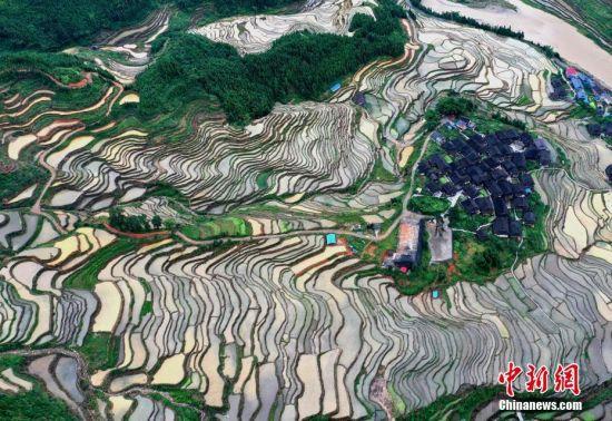 6月9日,仲夏时节,位于贵州省从江县刚边乡的宰别梯田雨水充沛,景色优美。中新社发 罗京来 摄 图片来源:CNSPHOTO