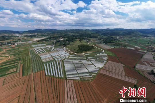 """俯瞰贵州威宁草海镇吕家河村环绕蔬菜基地""""组组通""""硬化路。 贺俊怡 摄"""