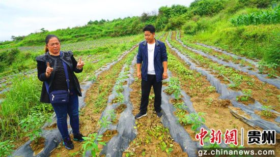 """杨兰英向驻村""""第一书记""""介绍线辣椒情况。"""
