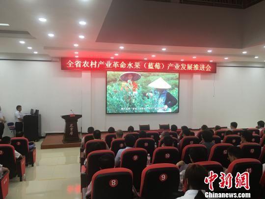 图为贵州省农村产业革命水果(蓝莓)产业发展推进会现场。 刘鹏 摄