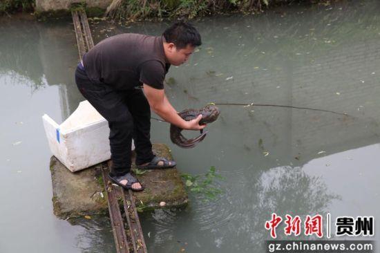 2019年7月3日晚,贵州省毕节市黔西县洪水镇洪箐村村民韩龙在洪水镇境内逢水河段误捉到一条娃娃鱼