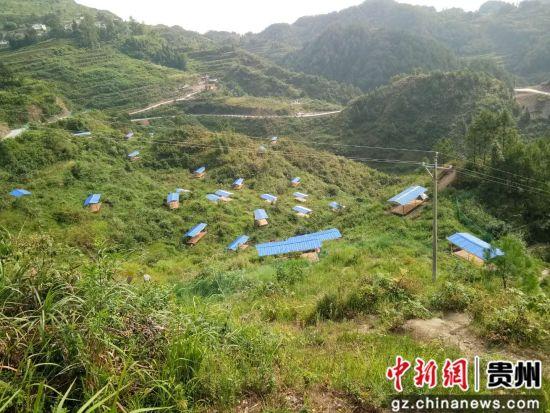 印江县沙子坡镇庹家村的林下养鸡。图由庹家村脱贫攻坚队提供