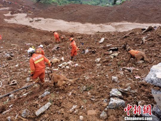 图为搜救犬在作业。贵阳市消防支队供图