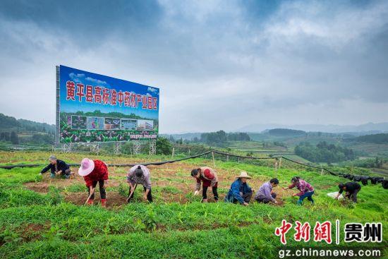 黄平县高标准中药材产业园区。郭文华供图