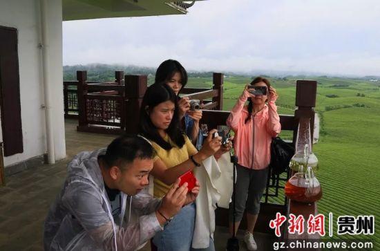 两岸媒体在湄潭永兴万亩茶海拍摄贵州茶。