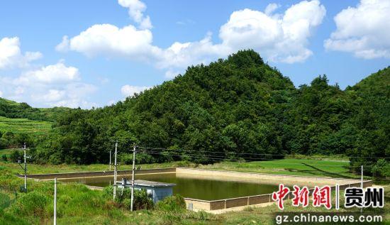 为了抵御干旱,江元哨建起烤烟专用蓄水池。