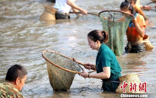 苗寨的男女老少齐上阵捉鱼。 奉力 摄