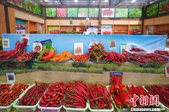 图为辣博会上展示的辣椒品种。 贺俊怡 摄