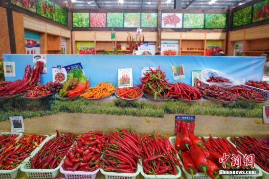 辣博会上展出的不同品种的辣椒。中新社记者 贺俊怡 摄