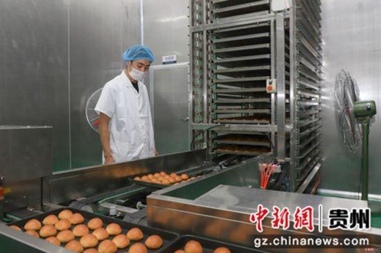 """9月5日,工作人员正在查看月饼质量。中秋佳节来临之际,贵州省贵阳市观山湖区一家月饼生产企业正在加紧赶制月饼,以供应市场所需。该企业生产的月饼是纯手工制作,因口感好而销售火爆,被当地民众称为""""网红月饼""""。"""