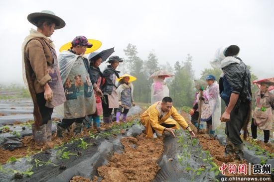 正安县新州镇党员张小勇在田间作技术培训。