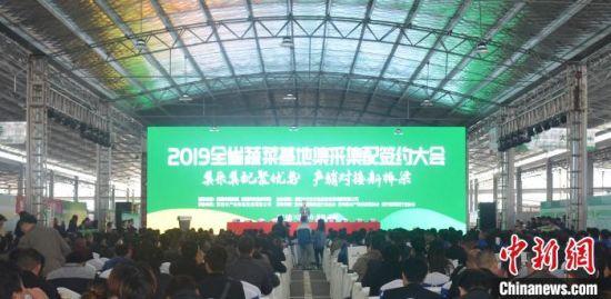 2019贵州省蔬菜基地集采集配签约大会活动现场。 袁航 摄