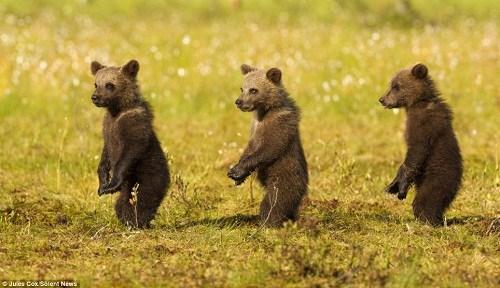 英国野生动物摄影师朱
