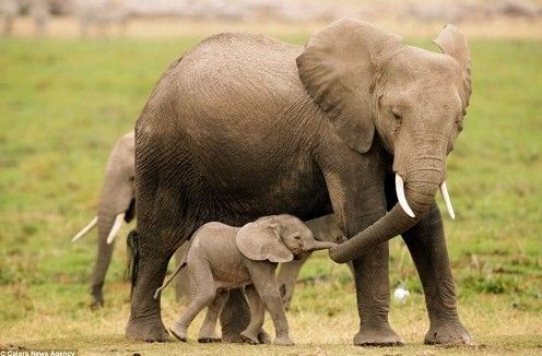 盘点动物母子温情瞬间