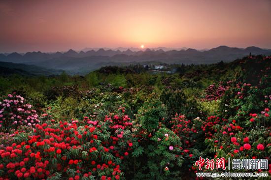 百里杜鹃成功升格 贵州5a级旅游景区达3个